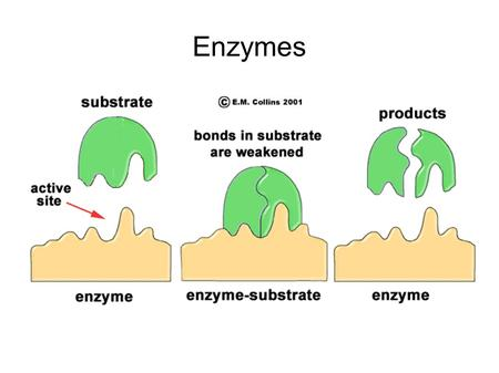 Enzymes. Let's Review: ΔG and rxn spontaneity Let's Review: Protein Structure.