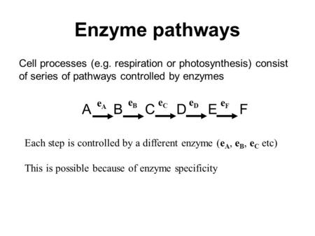 Cell processes (e.g. respiration or photosynthesis) consist of series of pathways controlled by enzymes ABCDEFABCDEF Enzyme pathways eFeF eDeD eCeC eAeA.