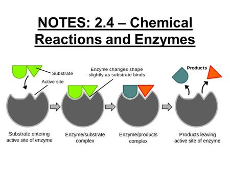 NOTES: 2.4 – Chemical Reactions and Enzymes. CHEMICAL REACTIONS ● Living things are made up of chemical compounds – some simple, some complex ● plus…EVERYTHING.