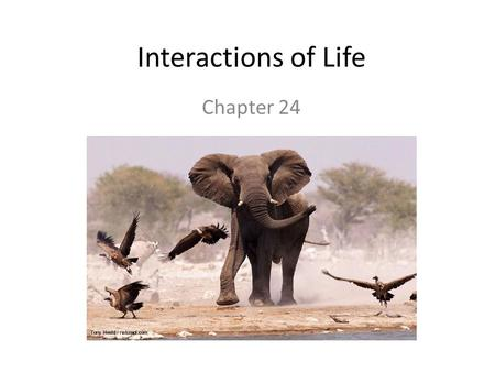 Interactions of Life Chapter 24.