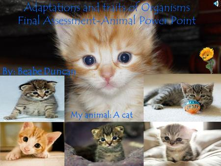Adaptations and traits of Organisms Final Assessment-Animal Power Point By: Beabe Duncan My animal: A cat.