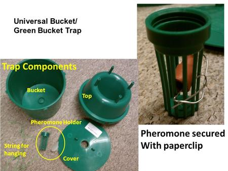 Trap Components Bucket Top Cover Pheromone Holder String for hanging Pheromone secured With paperclip Universal Bucket/ Green Bucket Trap.