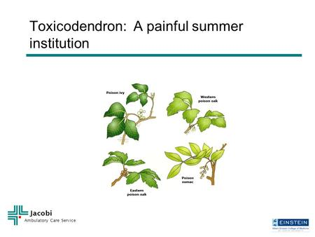 Jacobi Ambulatory Care Service Toxicodendron: A painful summer institution.