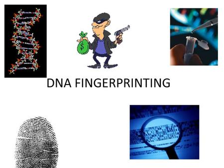 DNA FINGERPRINTING. Where is the DNA located in the blood?