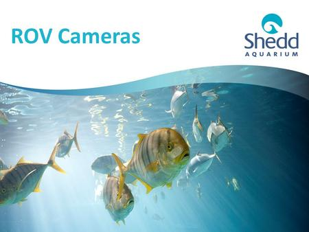 ROV Cameras. Extending Your Camera We want your ROV to be able to see the sea! (And the pool)