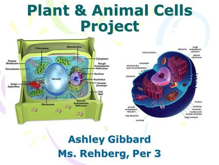 Plant & Animal Cells Project Ashley Gibbard Ms. Rehberg, Per 3.