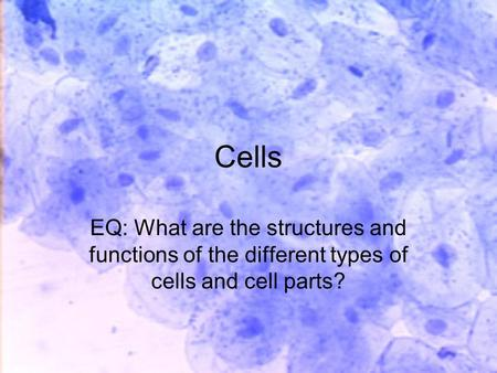 Cells EQ: What are the structures and functions of the different types of cells and cell parts?