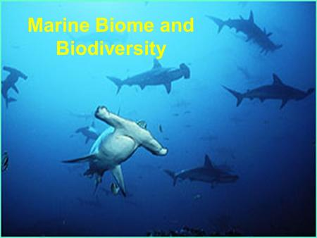 Marine Biome and Biodiversity