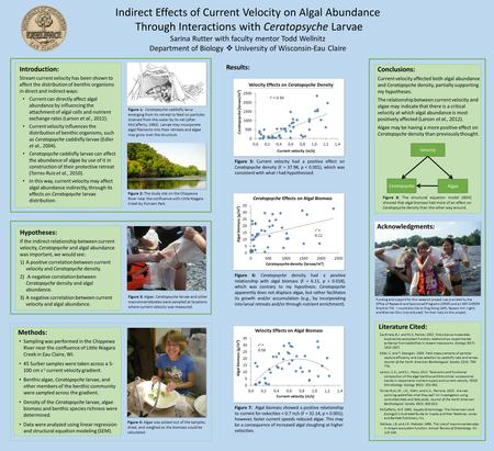 Indirect Effects of Current Velocity on Algal Abundance Through Interactions with Ceratopsyche Larvae Sarina Rutter with faculty mentor Todd Wellnitz Department.