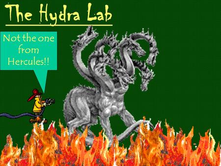 The Hydra Lab Not the one from Hercules!! Cnidarians (formerly coelenterates) have two cell layers, tentacles armed with stinging cells, a single-ended.