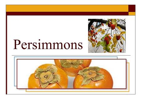 Persimmons. There are two major types of persimmons; the pumpkin shaped Fuyu which can be eaten right away, and the acorn shaped Hachiya which can't.