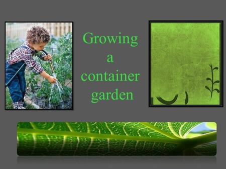 Growing a container garden. Navigation To navigate this presentation, you can click on the user interface icons below. Click on this image to get back.