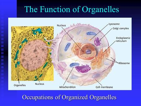 The Function of Organelles Occupations of Organized Organelles.