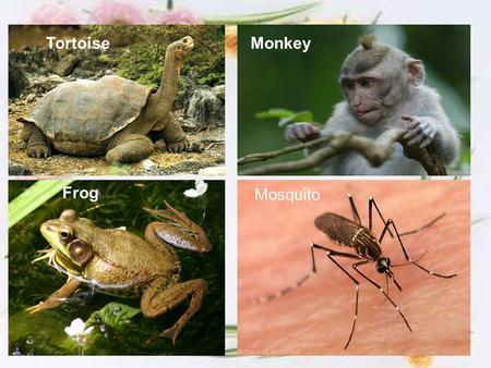 Monkeys and Apes Endangered? How can you help?. Who's ...