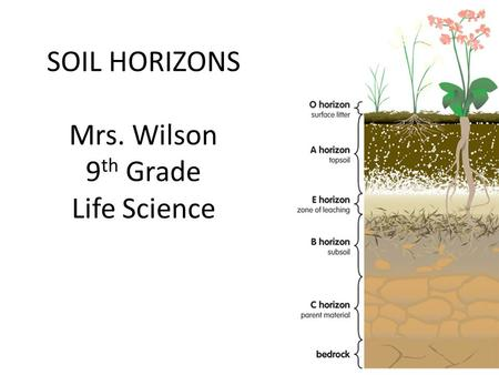 SOIL HORIZONS Mrs. Wilson 9 th Grade Life Science.