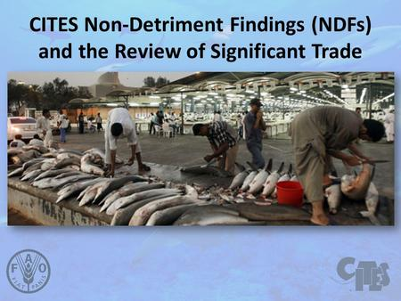 CITES Non-Detriment Findings (NDFs) and the Review of Significant Trade.