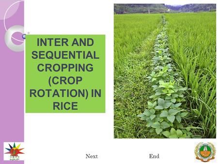 INTER AND SEQUENTIAL CROPPING (CROP ROTATION) IN RICE NextEnd.
