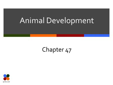 Animal Development Chapter 47. Slide 2 of 13 Post-fertilization  After fertilization, embryology occurs  Embryology is the development of the zygote.