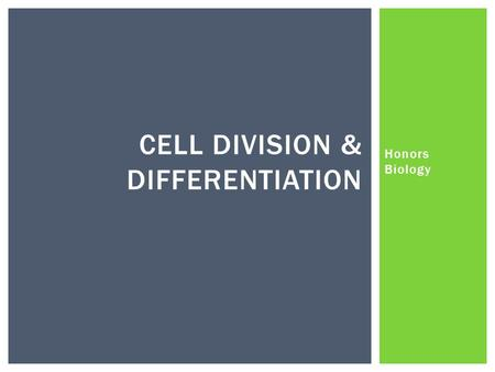Honors Biology CELL DIVISION & DIFFERENTIATION.  What are some reasons why cells divide?  Replacement  Growth  Regeneration  Too big (more on that.