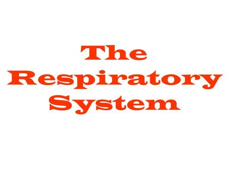 The Respiratory System Function A collection of organs that take in oxygen and expel carbon dioxide.