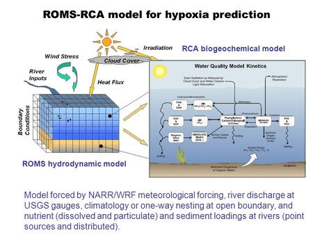 ROMS hydrodynamic model ROMS-RCA model for hypoxia prediction RCA biogeochemical model Model forced by NARR/WRF meteorological forcing, river discharge.