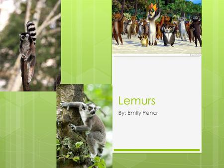 Lemurs By: Emily Pena. What do they look like?  The size of a lemur can vary from about 15-22 pounds  The color of a lemurs fur can be shades of red,