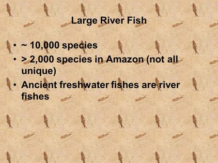 Large River Fish ~ 10,000 species > 2,000 species in Amazon (not all unique) Ancient freshwater fishes are river fishes.