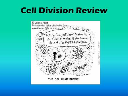 Cell Division Review. The cell prepares itself for mitosis during this stage of the cell cycle. INTERPHASE.