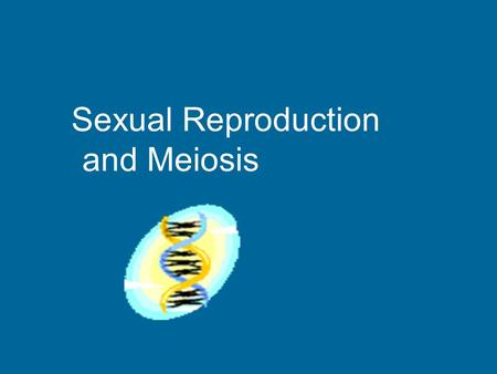 Sexual Reproduction and Meiosis Sexual Reproduction How new organisms are produced 2 new cells come together Formed from cells in reproductive organs.