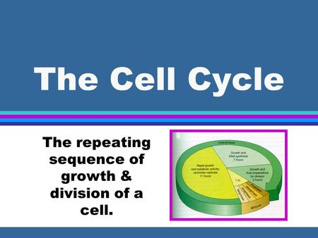 The Cell Cycle The repeating sequence of growth & division of a cell.