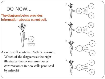 DO NOW… The diagram below provides information about a carrot cell. A carrot cell contains 18 chromosomes. Which of the diagrams at the right illustrates.