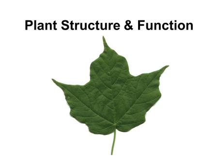 <strong>Plant</strong> Structure & Function. <strong>Plant</strong> Structure Root System Shoot System –Stem –Leaves –Flowers.