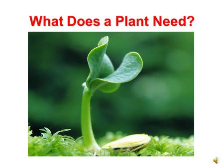 What Does a Plant Need? Needs of Plants Like all living things, a plant has certain needs. They need air, water, energy from food, and a place to live.