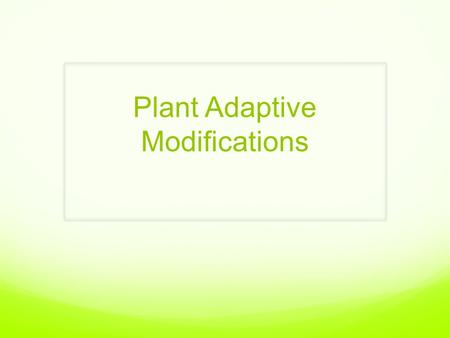 Plant Adaptive Modifications. By now, you should be familiar with the basic structures of plants… Roots Stem Leaves Seeds Flowers (only in angiosperms)