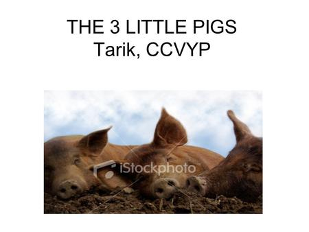 THE 3 LITTLE PIGS Tarik, CCVYP. Once upon a time there were 3 piglets. They lived on a farm with their mom. One day the mom got fed up with taking care.