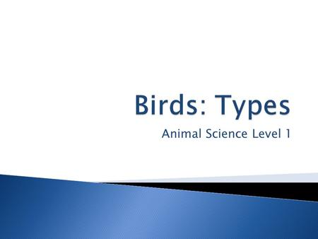 Animal Science Level 1. Intro Video  Unit Essential Question ◦ What are common characteristics of bird care?  Lesson Questions: ◦ Fill out daily.