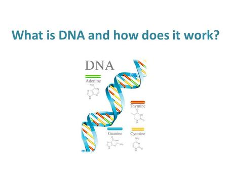 What is DNA and how does it work?. Warm Up Question If one parent is Heterozygous for the trait of brown eyes, and the other parent has blue eyes, what.