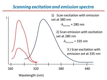 Scanning excitation and emission spectra I Wavelength (nm) 260 320 380 440 1)Scan excitation with emission set at 380 nm -λ ex,max = 280 nm 2) Scan emission.