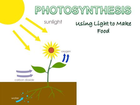AN OVERVIEW OF PHOTOSYNTHESIS Copyright © 2009 Pearson Education, Inc.