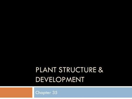 PLANT STRUCTURE & DEVELOPMENT Chapter 35. Overview  Roots – Underground  Shoots – Leafs & Stems  3 Tissue types in the above Dermal, Vascular, & Ground.
