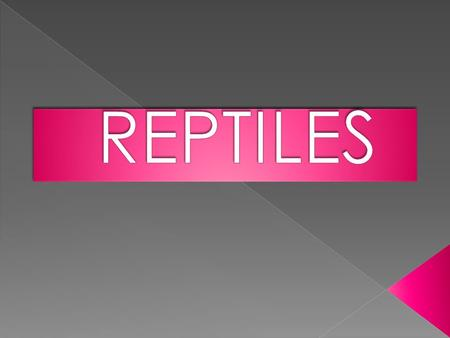  Characteristics of reptiles  The reptiles  The snakes  The lizards  The crocodriles  The turtles  Photos  Qestions  Videos.