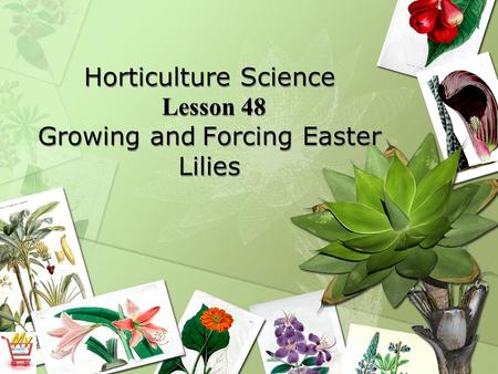 Horticulture Science Lesson 48 Growing and Forcing Easter Lilies.