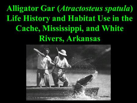 Alligator Gar (Atractosteus spatula) Life History and Habitat Use in the Cache, Mississippi, and White Rivers, Arkansas.