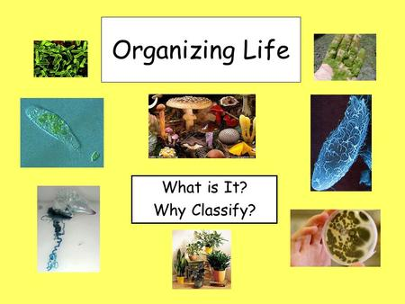 Organizing Life What is It? Why Classify?. I. Classification A.What is it? 1. Grouping of organisms based on similarities. 2. Examples of classification: