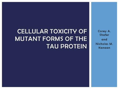 Corey A. Shafer and Nicholas M. Kanaan CELLULAR TOXICITY OF MUTANT FORMS OF THE TAU PROTEIN.