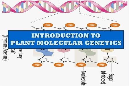 INTRODUCTION TO PLANT MOLECULAR GENETICS. Genetics The study of heredity The study of heredity The study of how differences between individuals are transmitted.
