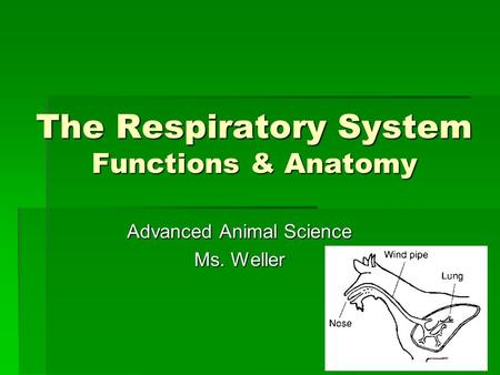 The Respiratory System Functions & Anatomy Advanced Animal Science Ms. Weller.