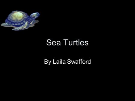 Sea Turtles By Laila Swafford. What is the Animal Group? They are in the reptiles group. They have scaly skin. They need shade and sun.