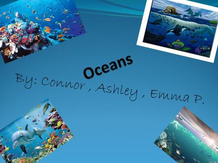 By: Connor, Ashley, Emma P.. Marine Ecosystem o Oceans major ecosystem is marine ecosystem. o Marine Ecosystem is one of the largest aquatic ecosystem.