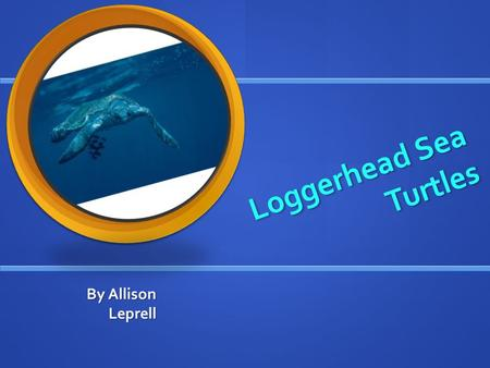 Loggerhead Sea Turtles Loggerhead Sea Turtles By Allison Leprell.